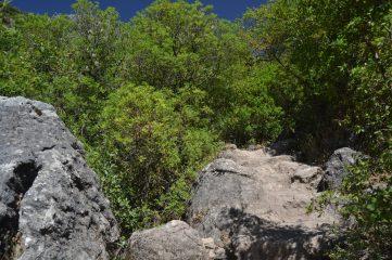Camino entre grandes rocas