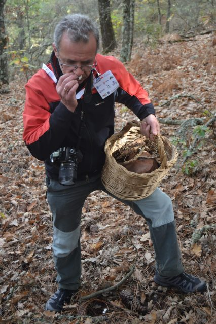 Rodrigo García examinando una seta