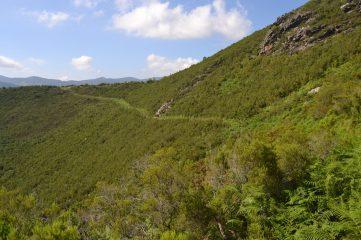 Sendero por la ladera