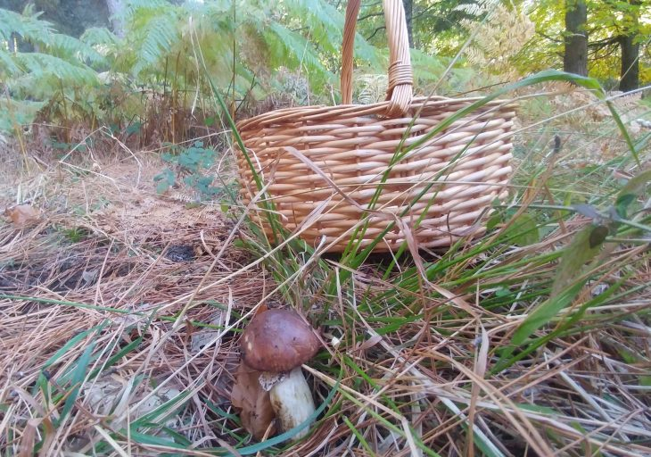 Tuitquedada Micológica en el Valle de Iruelas