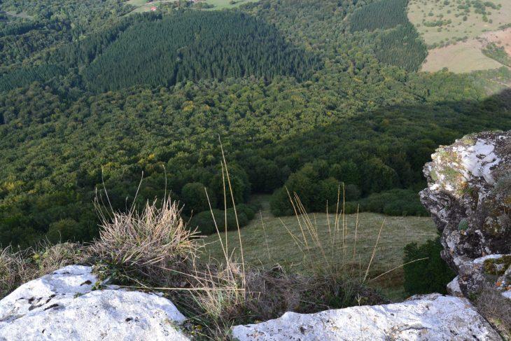 Bosque en el valle
