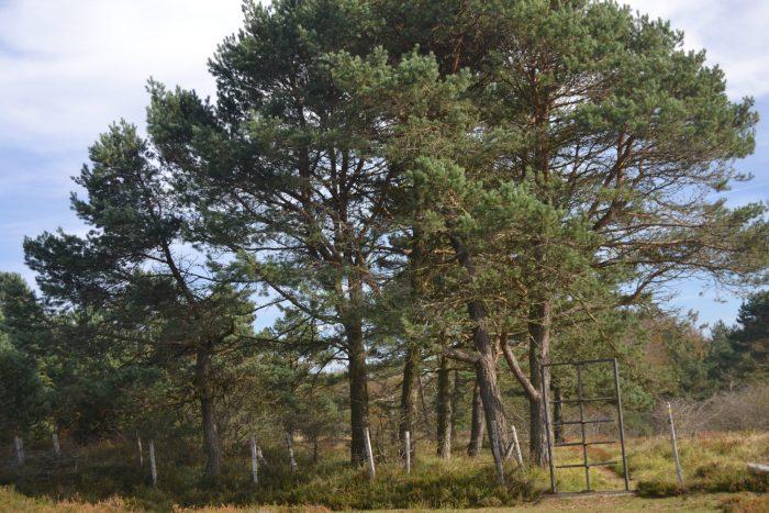 Entrada al pinar