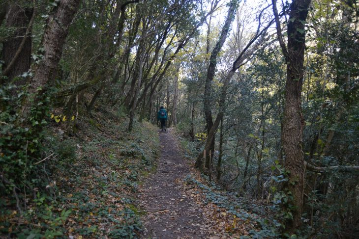 Bosque junto al Río Ebro