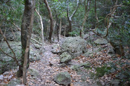 Bosque de boj