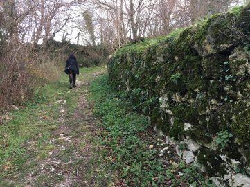 Sendero entre muros de piedra en Cadagua