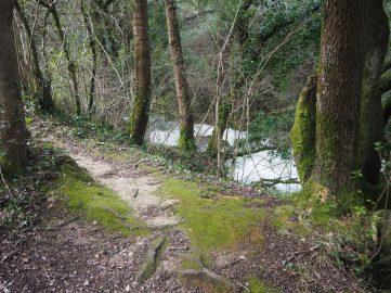 Orilla del Río Cadagua