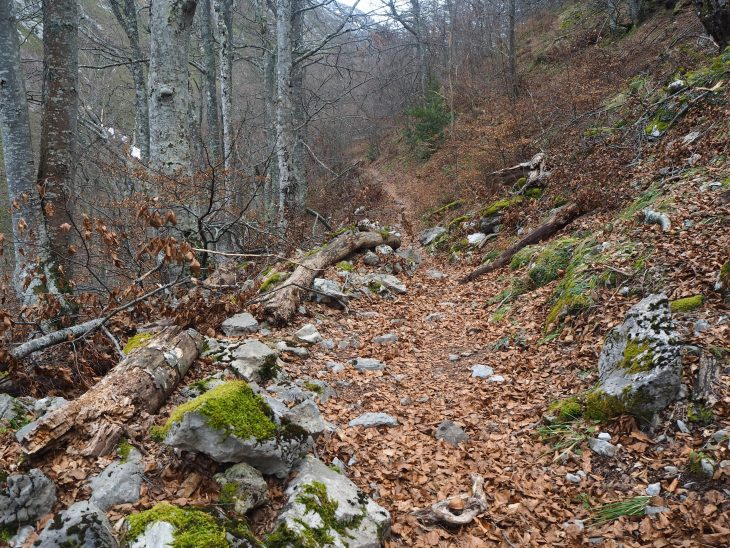 Bosque junto a la Fuentona