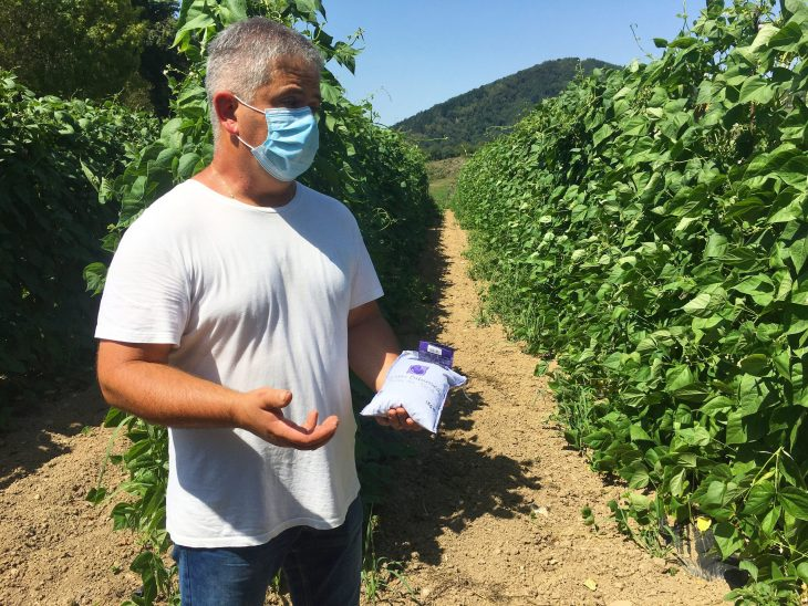 Plantación de alubias de Tolosa en Urkizu