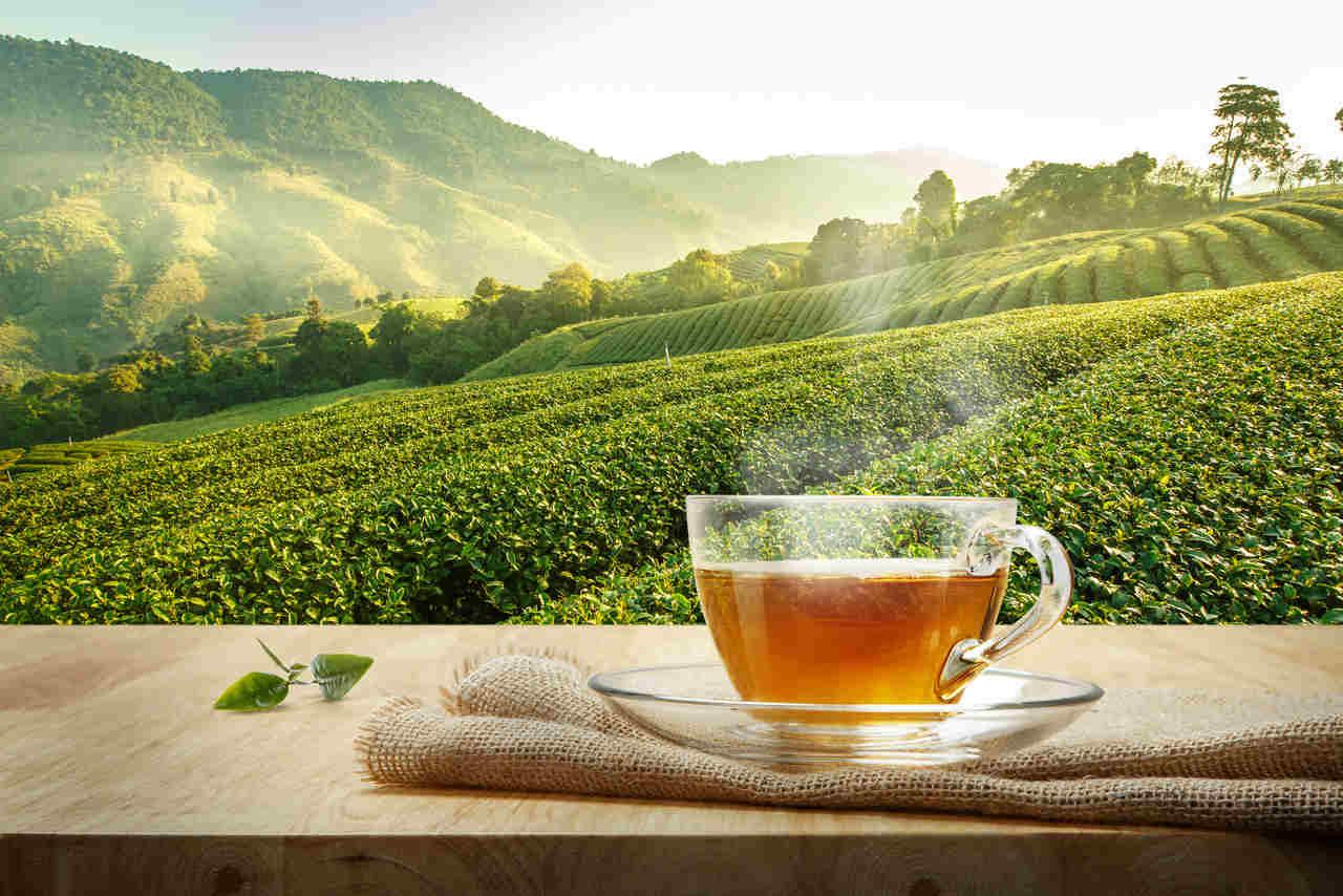 Çayın Kısa Bir öyküsü