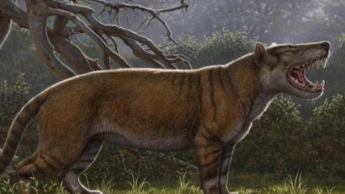 Dünyada yaşamış en büyük memelinin kemikleri bulundu