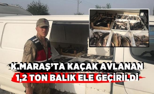 Kahramanmaraş'ta minibüsün içinde kaçak avlanan balık ele geçirildi