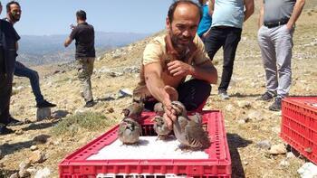 Nurhak'ta 2 bin kınalı keklik doğaya bırakıldı