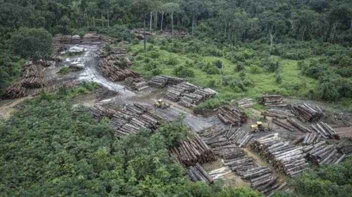 Amazonlardaki ormansızlaştırma en yüksek seviyede