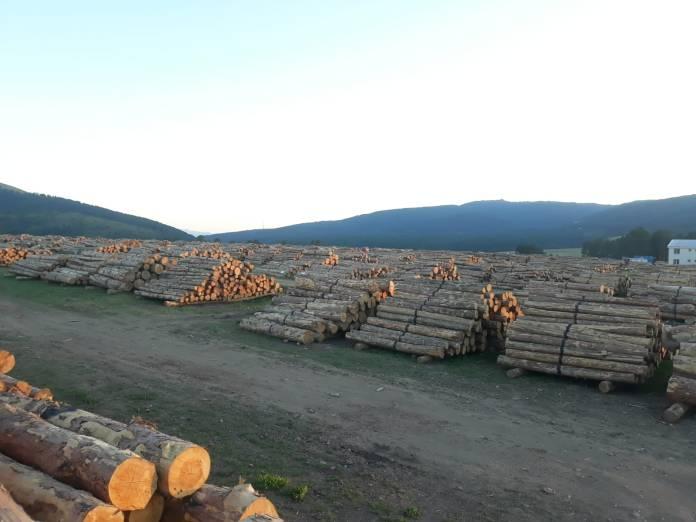 Ormanların Kardeşliği Platformu: Orman kıyımına dur diyelim