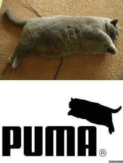 Puma_PlusSize