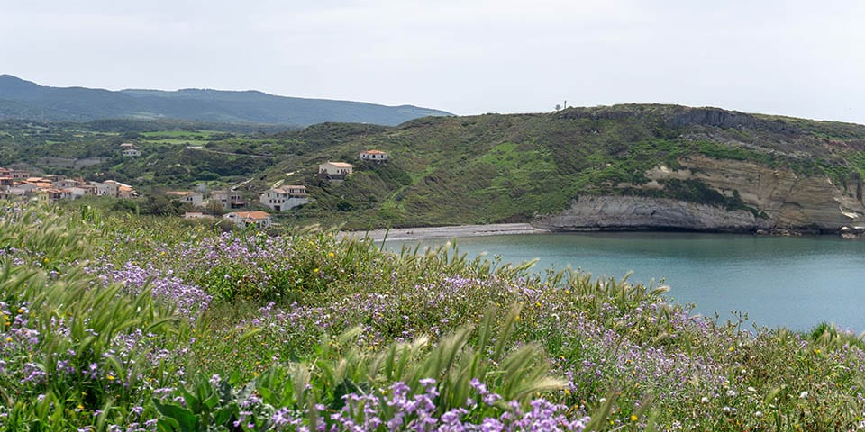 The sea on the west coast of Sardinia at Santa Caterina di Pittinurri, from the hill with the flowers