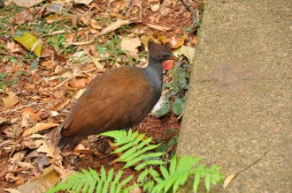 One of the wild fowl roaming around in the grounds