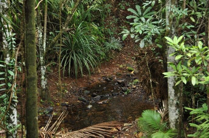 Part of the rainforest=est floor