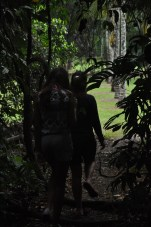 Emerging from the rainforest.