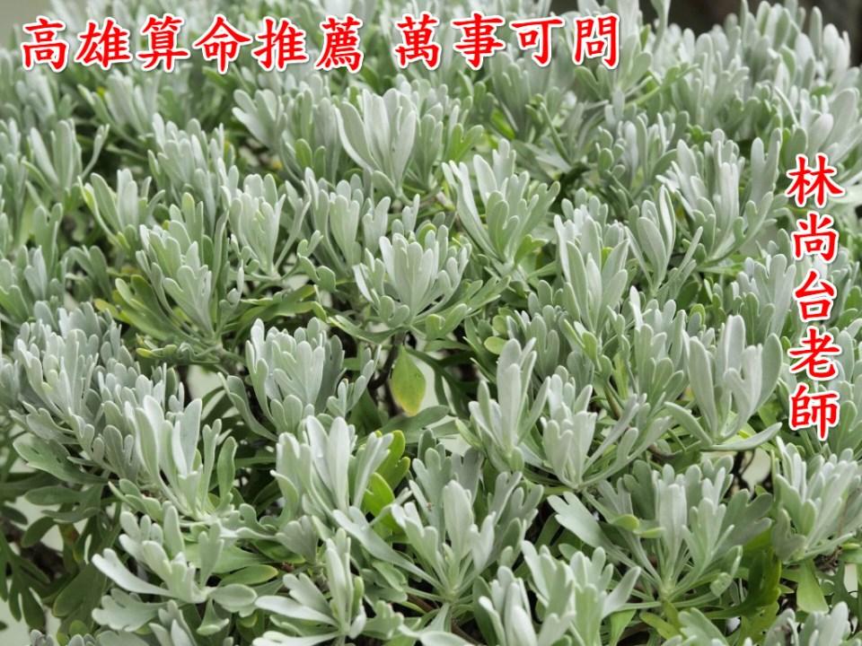 exorcism-plant-seremban-6-1024x768_meitu_1