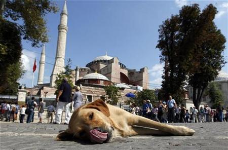 A stray dog lies outside the Hagia Sophia museum in Istanbul