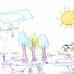 Basic Carbon Cycle Diagram Hot Rod Wiring Download Yesitsyomoma 39s Blog Ib Reviews And Notes