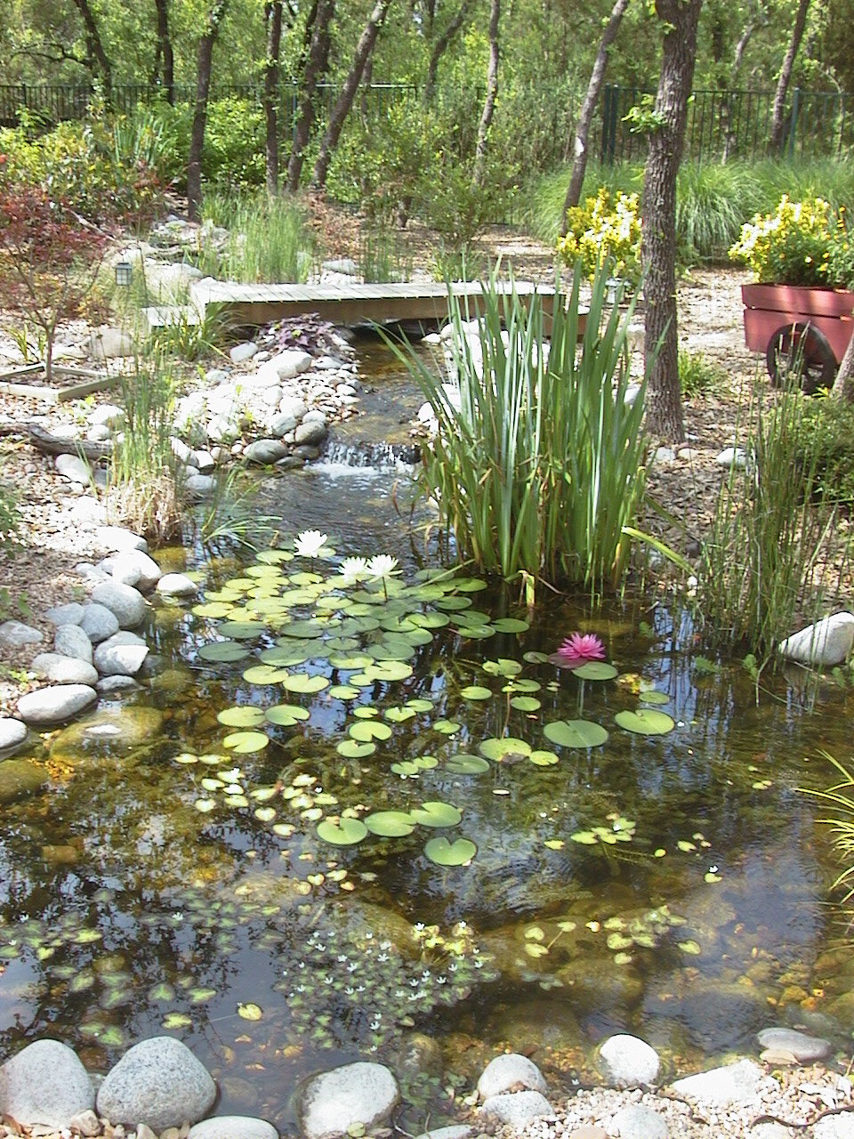 Pond Wallpaper Hd Pond Wallpapers High Quality Download Free
