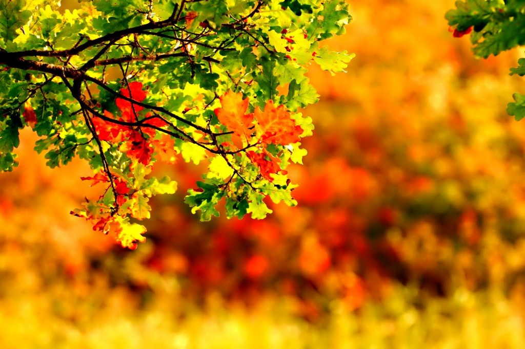 Late Fall Iphone Wallpaper September Wallpapers High Quality Download Free