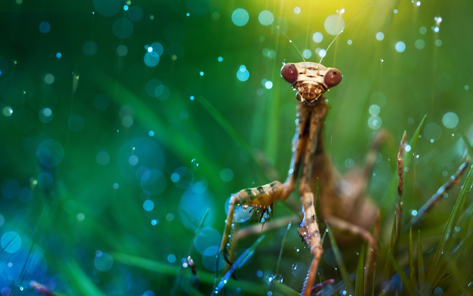 Macro Photography Wallpapers High Quality  Download Free