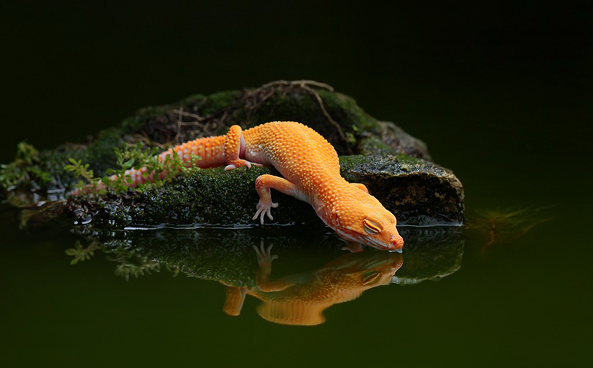 Cute Baby Lizards Wallpaper 4k Lizards Wallpapers High Quality Download Free