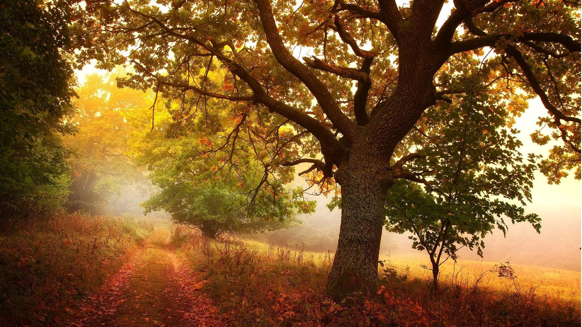 Free Wallpaper Fall Leaves 1600x900 4k Scenic Route Wallpapers High Quality Download Free