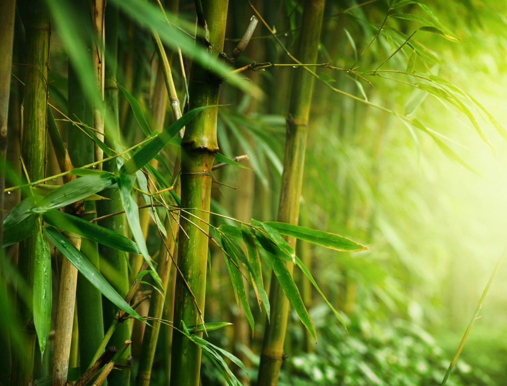 bamboo forest wallpapers high