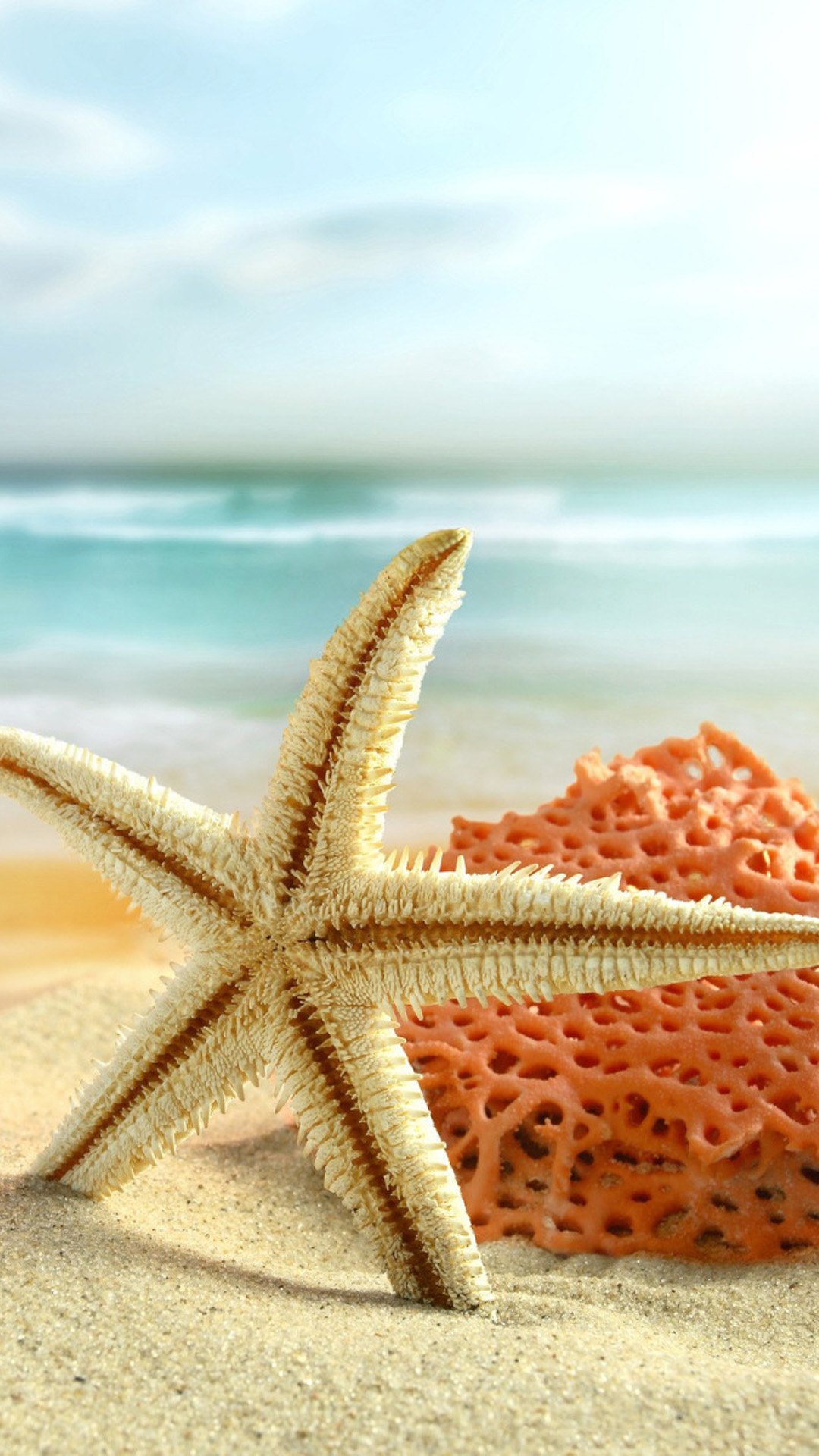 Apple Iphone Background Wallpapers Starfish Wallpapers High Quality Download Free