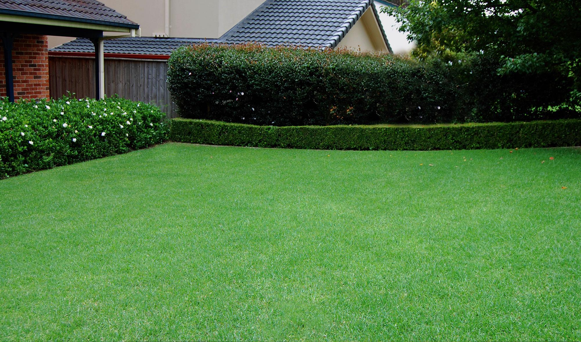 lawns images