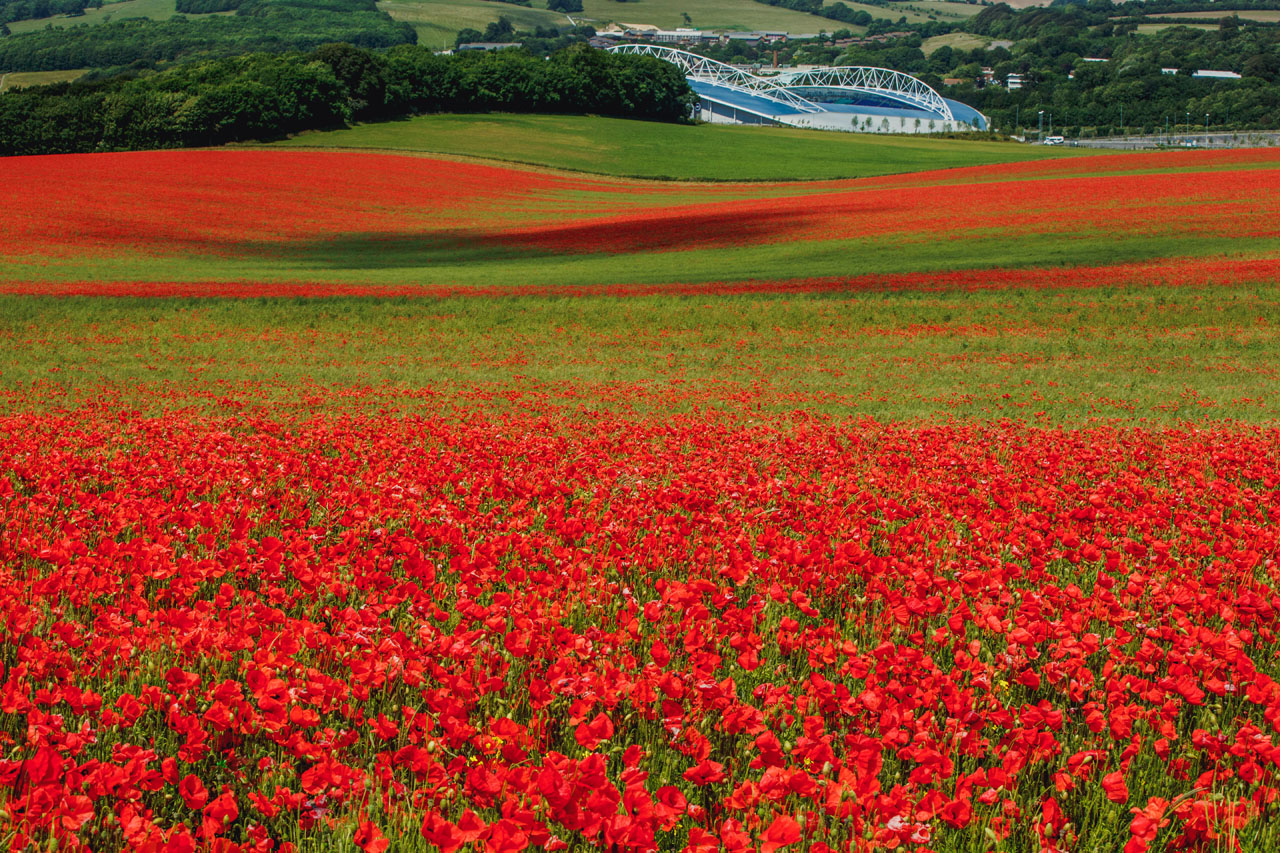 Poppy Wallpaper For Iphone Poppy Fields Wallpapers High Quality Download Free