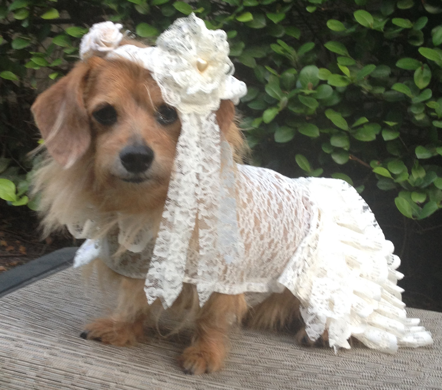 Pack De Wallpapers Hd Para Pc Dog Wedding Wallpapers High Quality Download Free