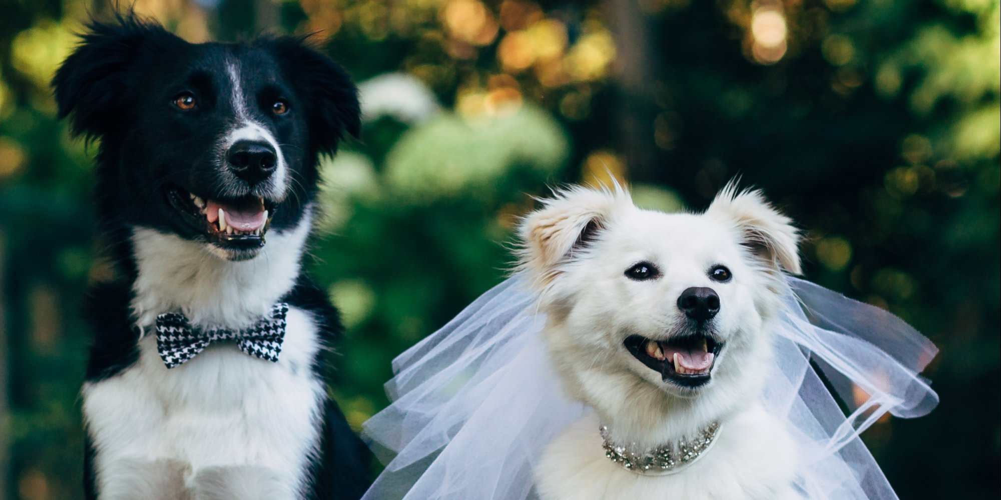 Full Hd Wallpaper Cute Couple Dog Wedding Wallpapers High Quality Download Free
