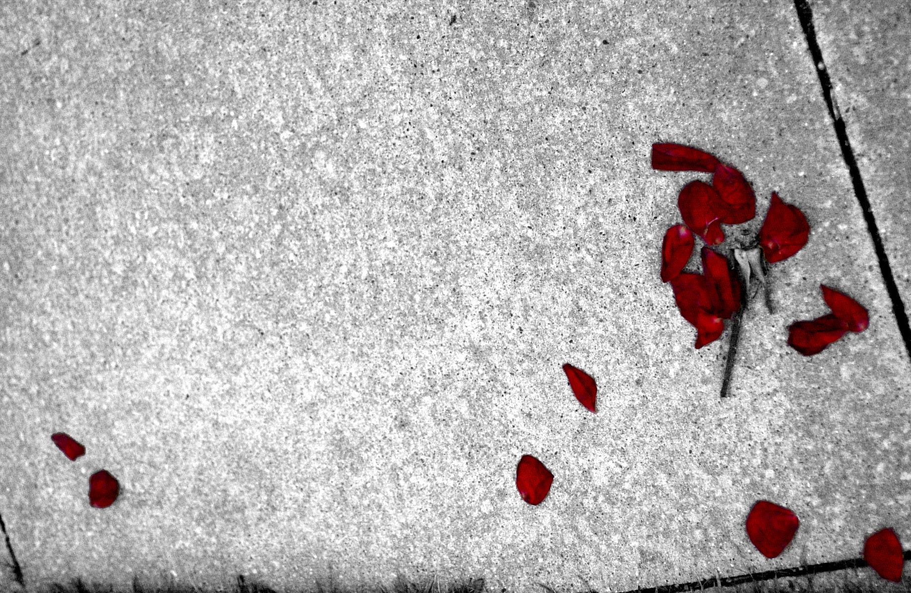 Falling Rose Petals Wallpaper The Road Of Rose Petals Wallpapers High Quality Download