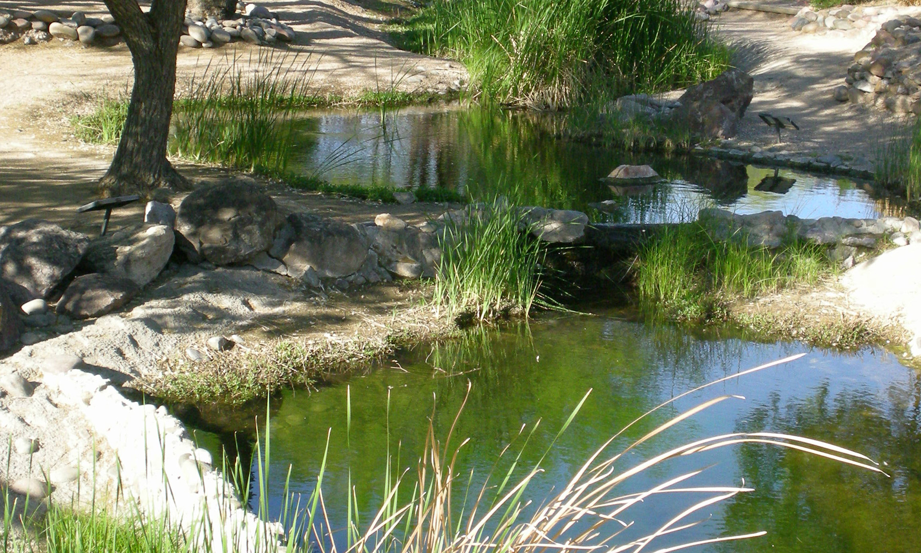 Pond Wallpaper Hd Oasis In The Desert Wallpapers High Quality Download Free