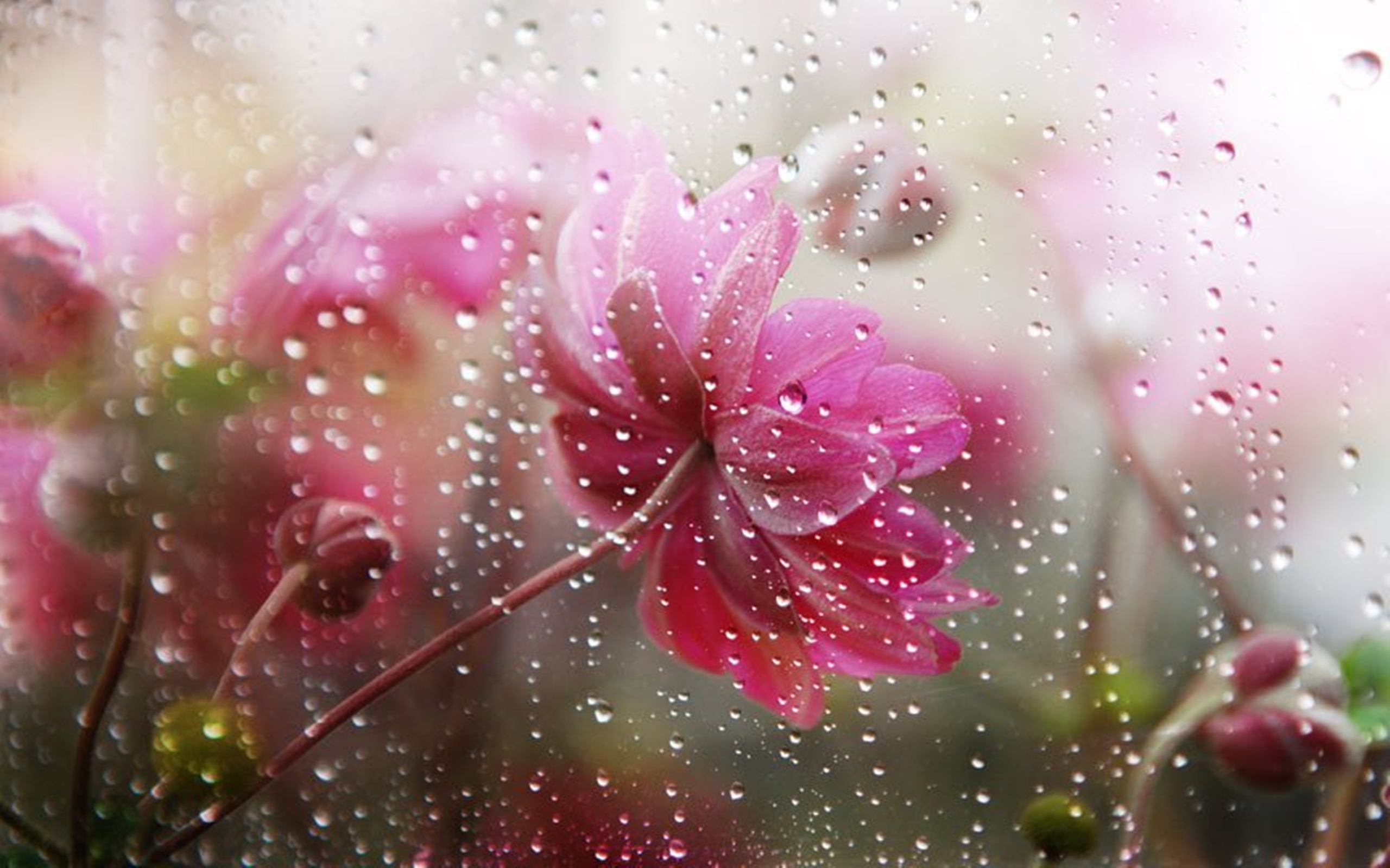 Falling In Love Hd Wallpapers Flowers In The Rain Wallpapers High Quality Download Free