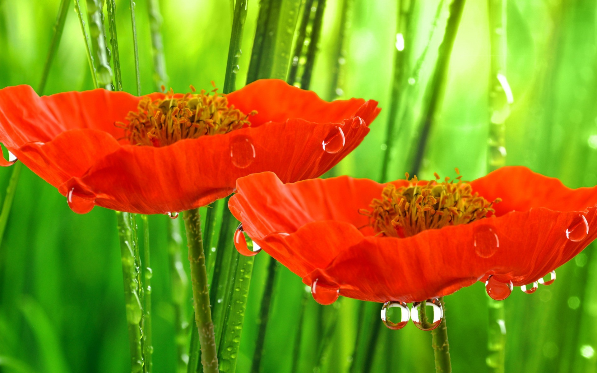 Falling Rain Wallpapers Desktop Flowers In The Rain Wallpapers High Quality Download Free