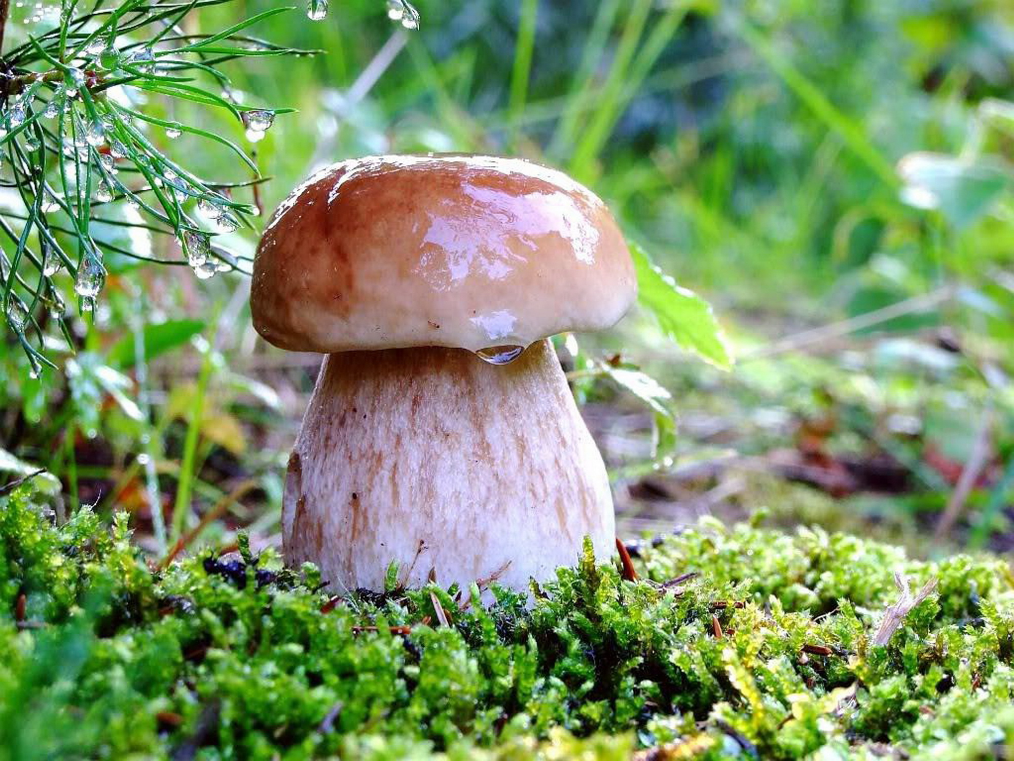 Mushrooms In The Rain Wallpapers High Quality