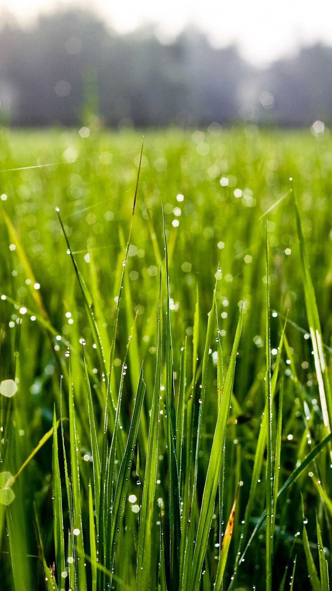 Full Hd Wallpapers 1080p Desktop Free Download 4k Green Grass Wallpapers High Quality Download Free