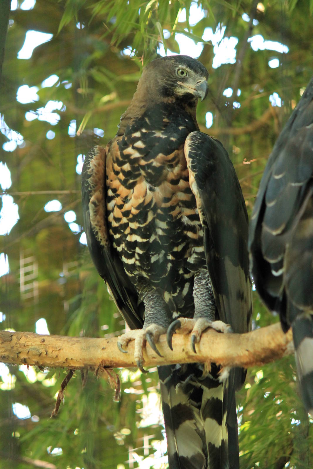 Iphone Hd Wallpapers 1080p Crowned Eagle Wallpapers High Quality Download Free
