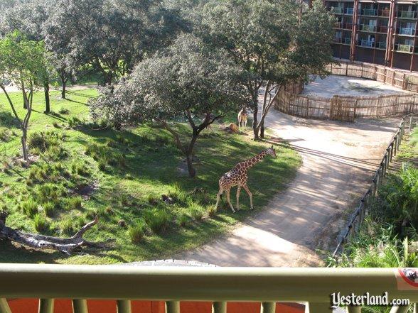 WW Goes To WDW: DVC Villa Views
