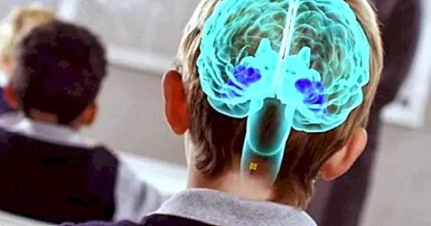 Neuroeducazione: apprendimento basato sulla neuroscienza - yes, therapy helps!