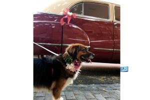 Bouquet de flores preservadas para perros