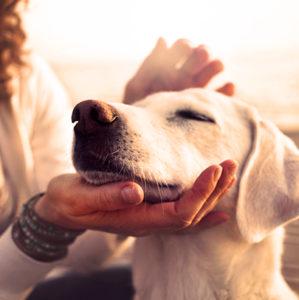 Cuidadora de perro en luna de miel