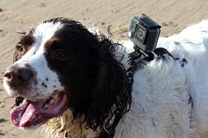 Camara de video con arnes para perros en boda
