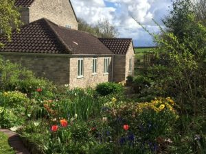 Spring flowers at the Annexe Yew Tree Cottage